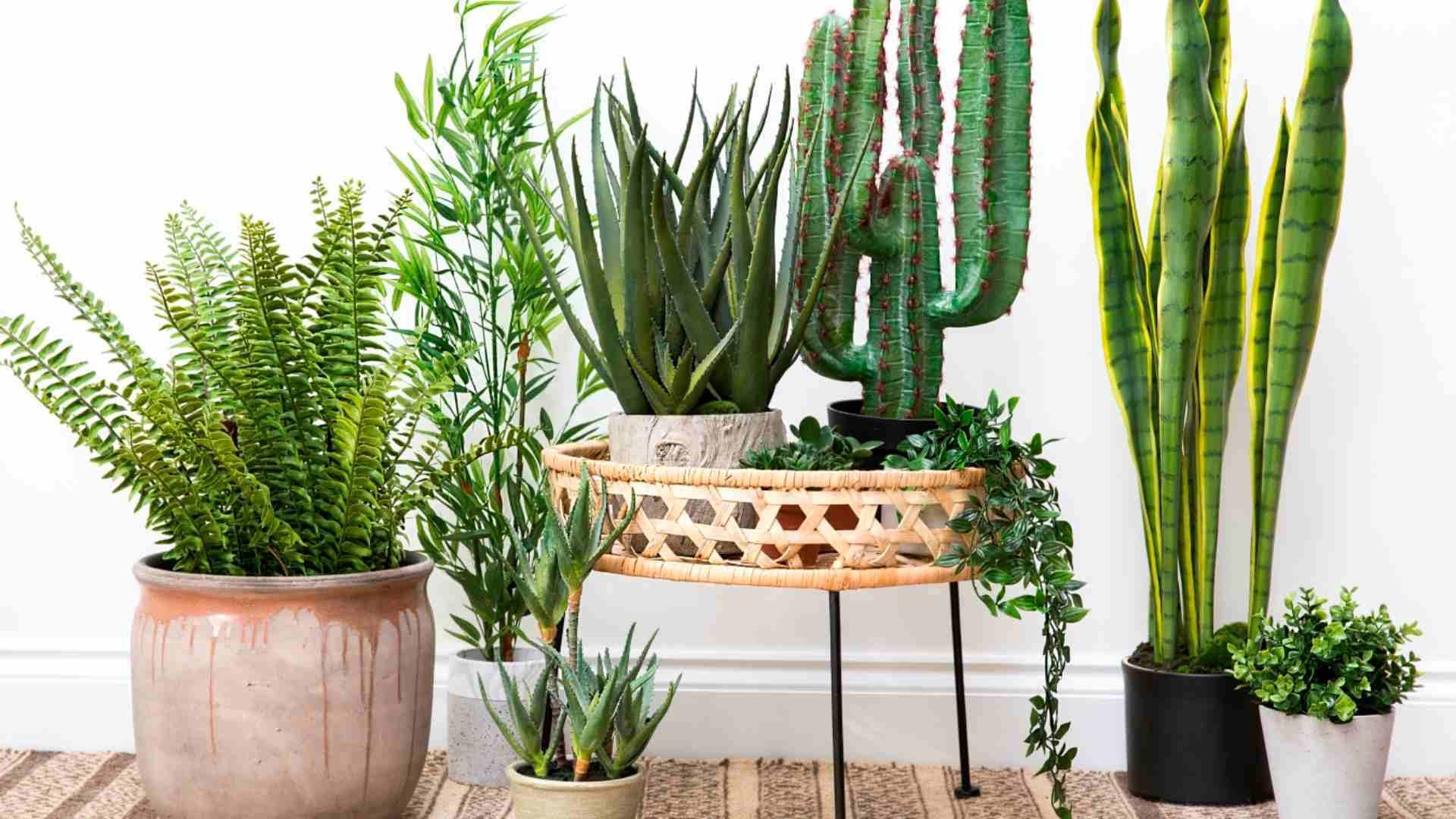 6 plantas de interior ideales para decorar tu departamento