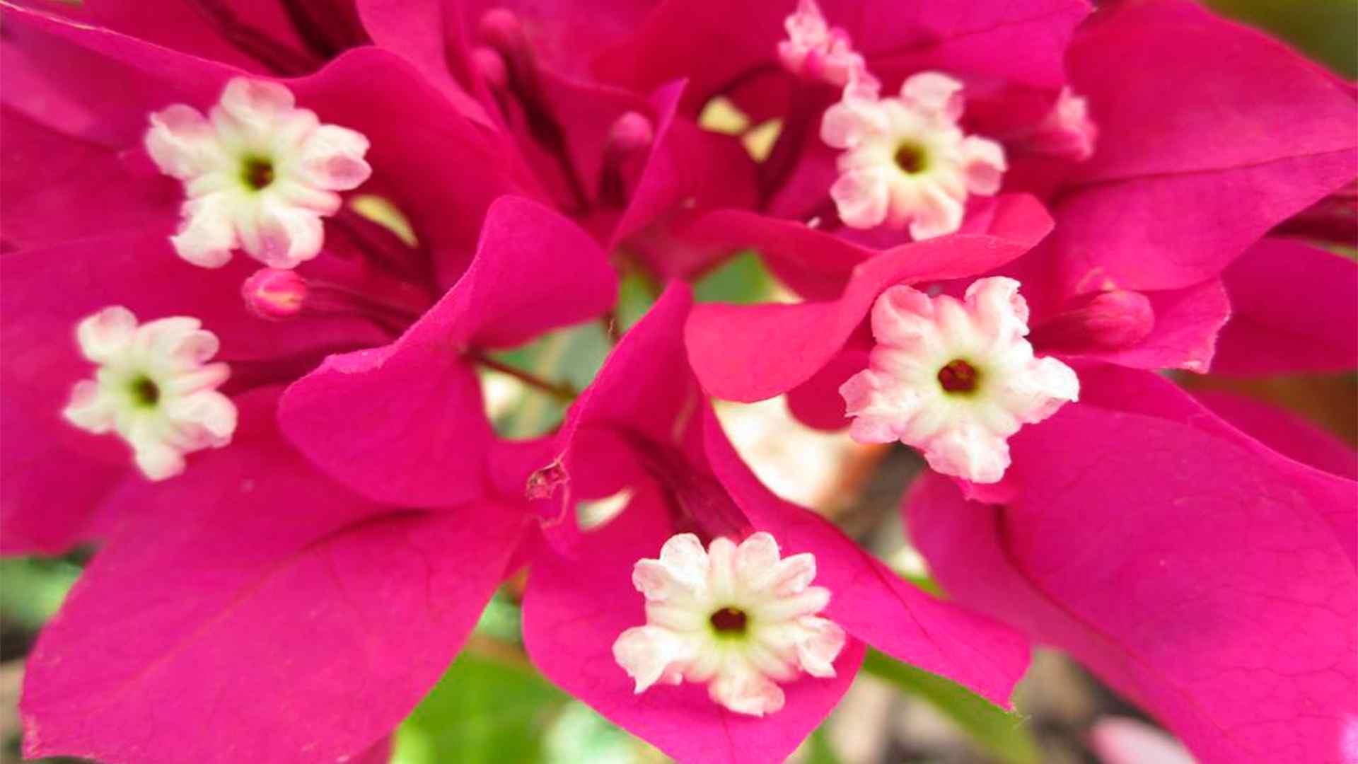 Las Flores Ideales Para Departamentos Con Terrazas Grandes